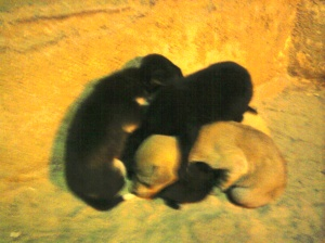 Puppies huddling for warmth